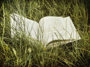 Book (on the grass), by Florin Gorgan